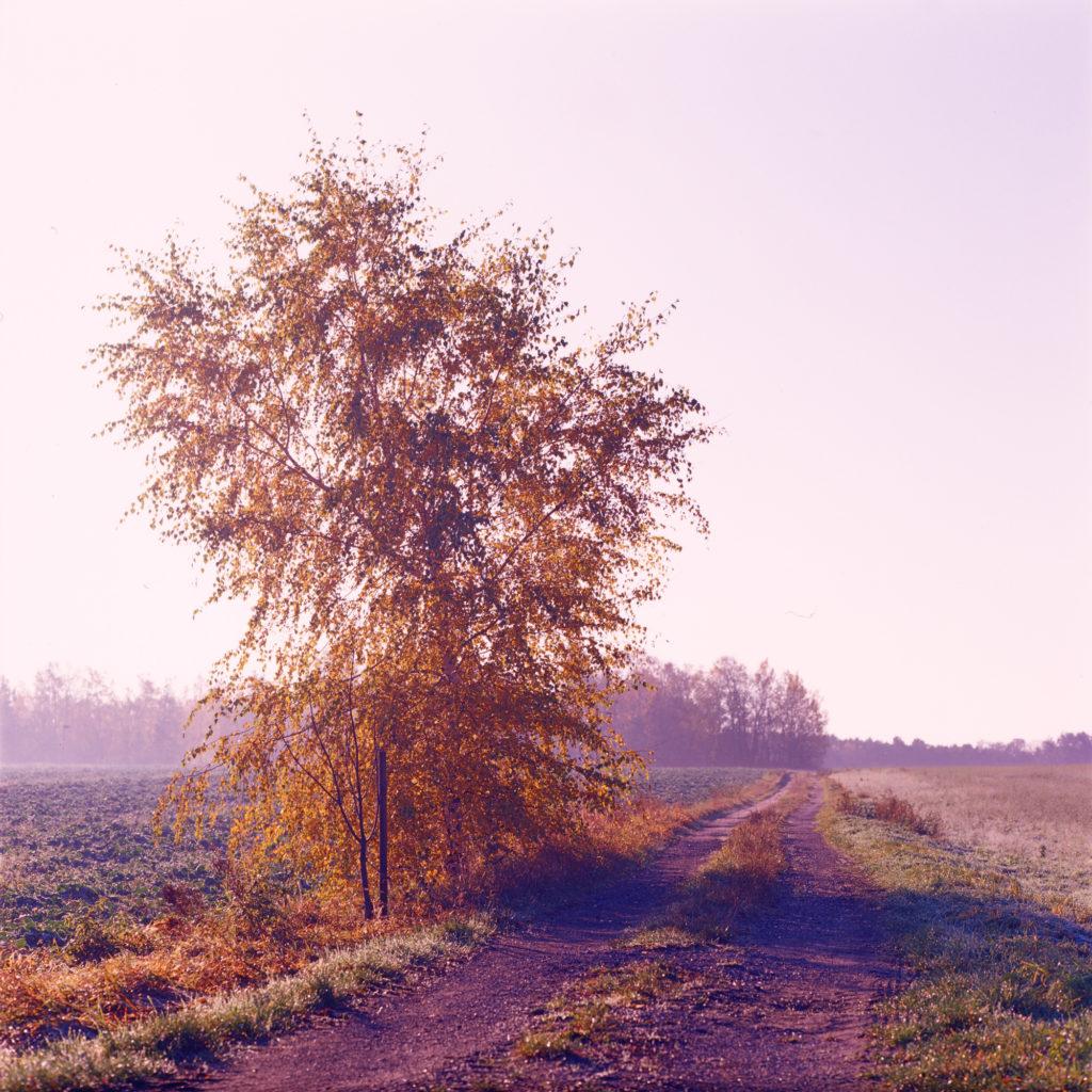 Kodak Ektachrome E100VS, Landschaft, Mittelformat, analog