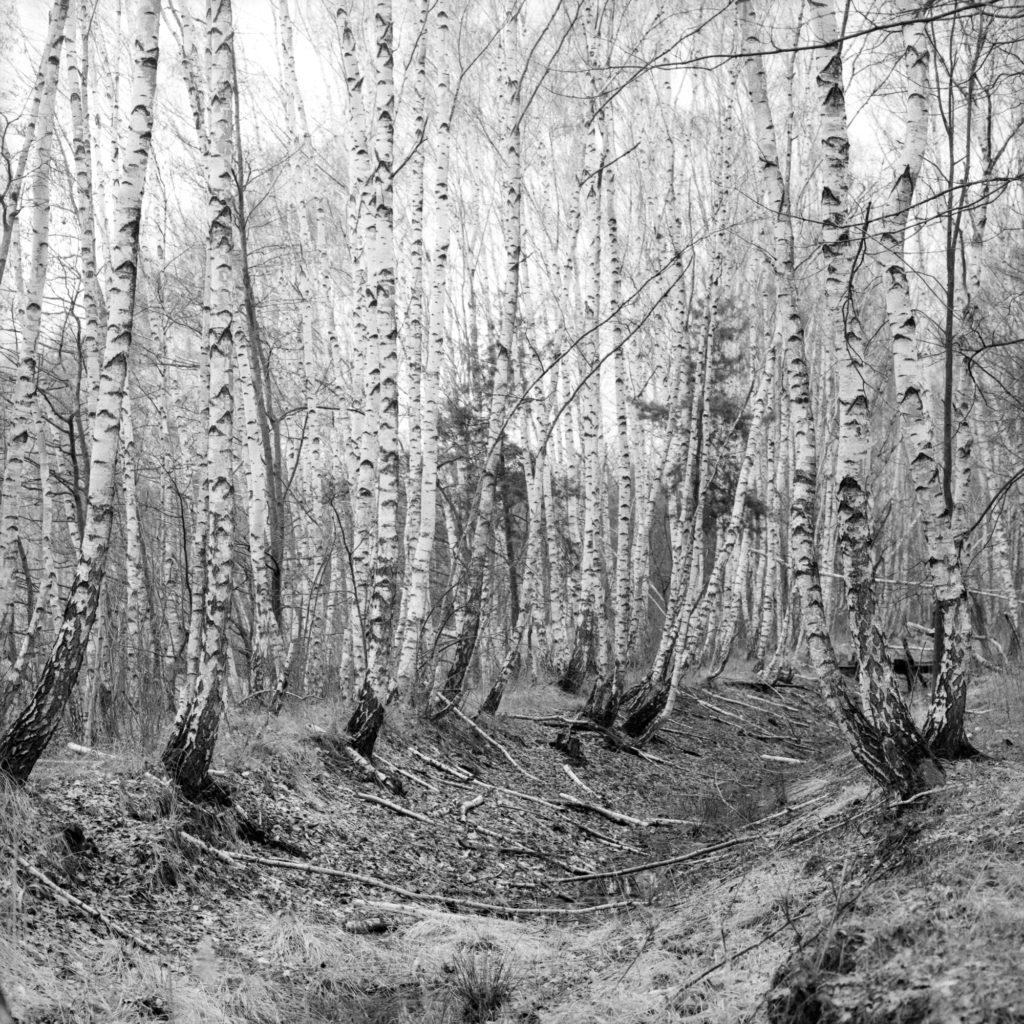 Orwo NP20, Mittelformat, birken, natur, schwarzweiß, analog
