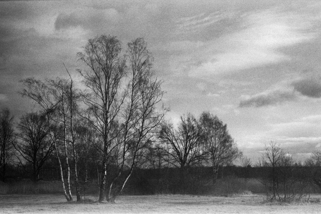 Orwo NP27, Mittelformat, birken, Landschaft, schwarzweiß, analog