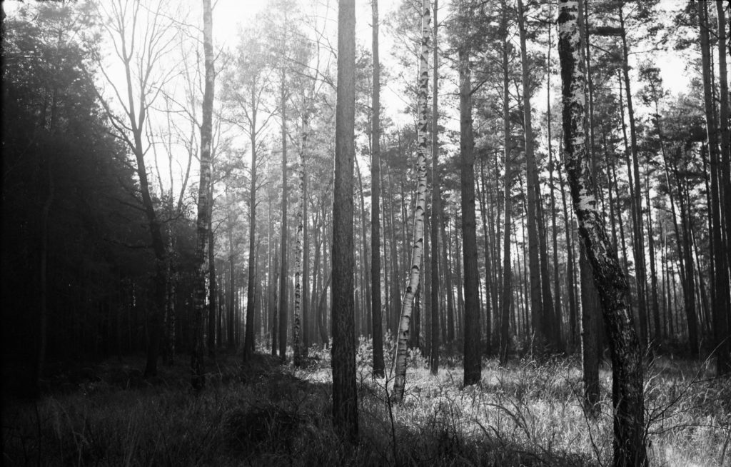Rollei Retro 400S, Zeiss Ikon Ikonta 520/2, Wald, kontrast
